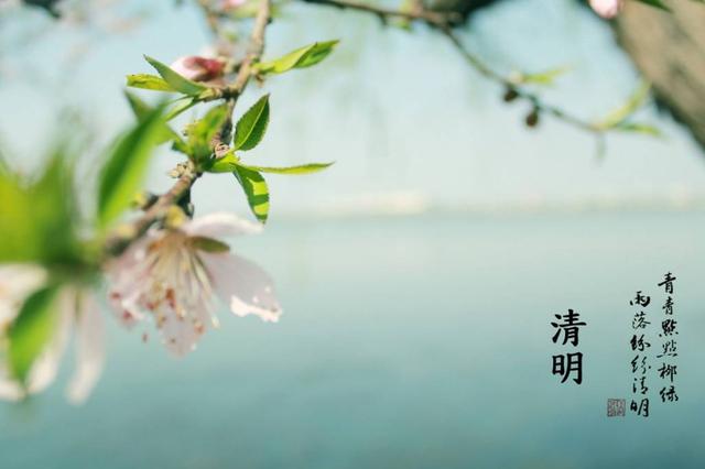 清明节将至 重庆市民政局呼吁文明殡葬低碳祭扫