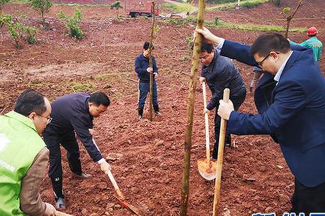 合川区今明两年将完成营造林面积76.26万亩