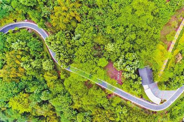 两江新区陡溪生态园建成投用 大片鸢尾花即将开放