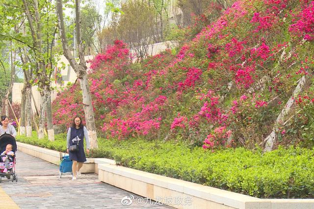 今年九龙坡将建成15个增绿添园项目 面积近67万平米