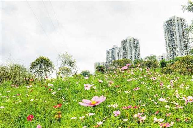主城新增绿化753万平方米 全面整治城市公园242个