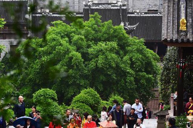 """重庆市发布""""四山""""保护提升方案 打造城市绿肺市民花园"""
