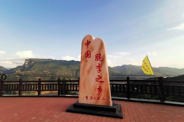 """【看长江之变】重庆巫山:""""巫山脆李""""带动农民脱贫致富"""