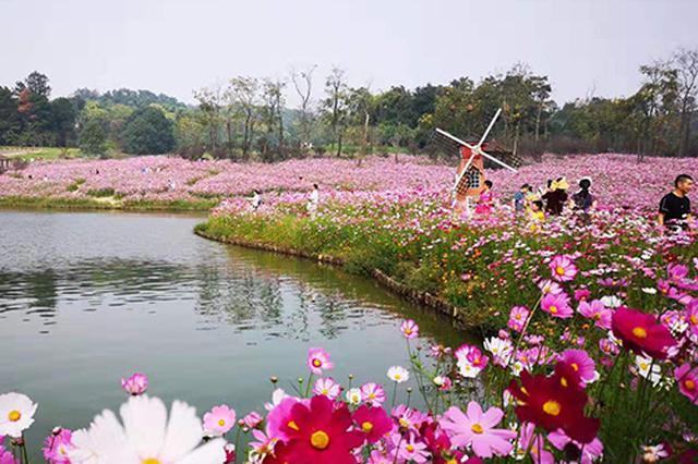"""巴南3000平方米浪漫花海""""上线"""" 花期持续至10月底"""