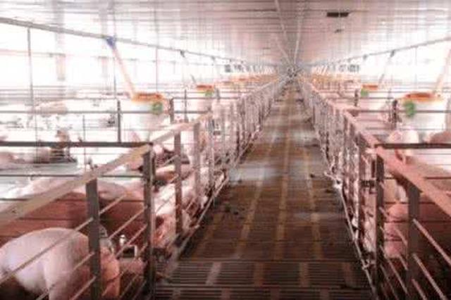 重庆安排6.6亿元扶持资金 推动生猪产能恢复