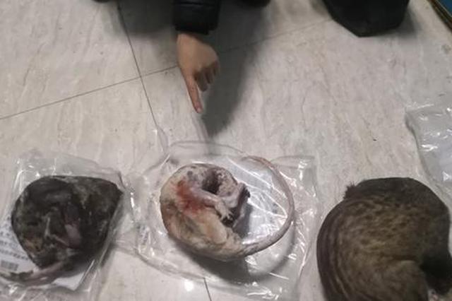 重庆10人非法狩猎野生动物110余只 被警方依法刑拘