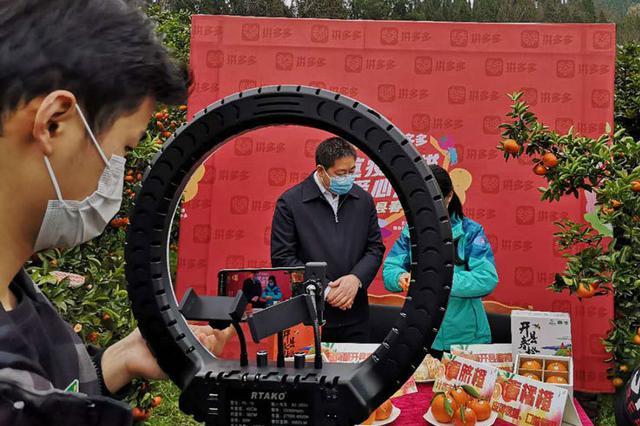 """重庆开州区长""""直播""""助农 卖出上万单""""开县春橙"""""""