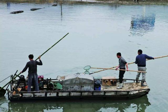 三峡库区腹地破获首例非法捕捞案 嫌疑人被当场抓获