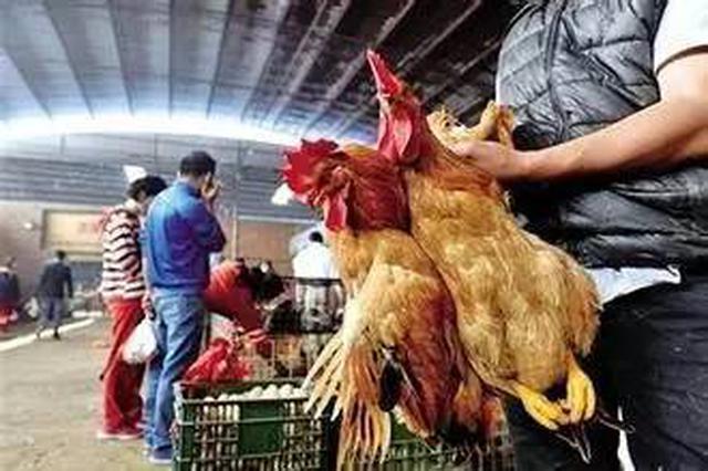 市民注意!重庆这些地方禁止活禽交易和宰杀