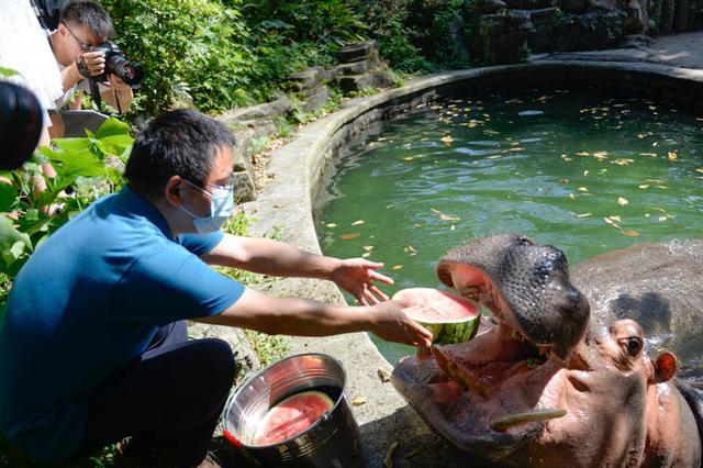 洗淋浴、吃冰镇西瓜……重庆这些动物开启避暑生活