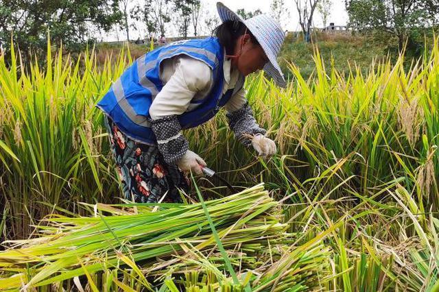 """重庆:农民足不出户当""""产业工人"""" 工作家庭两不误"""