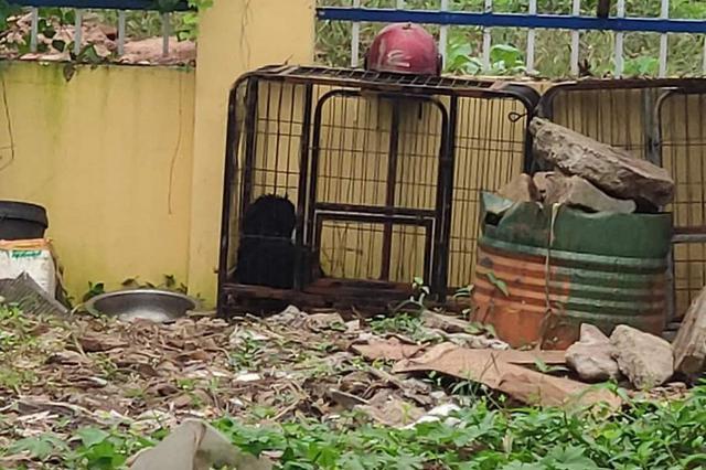 重庆一小区有人露天杀狗贩卖 相关部门拆除宰杀工具
