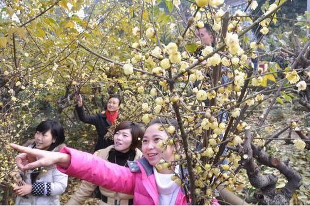 春节长假到农家乐、乡村酒店度假游客超2000万人次