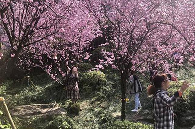 """春花灿烂过敏患者大幅增加?有时花粉只是""""背锅侠"""""""