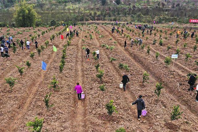 重庆公布54个义务植树基地 快来看看有哪些地方?