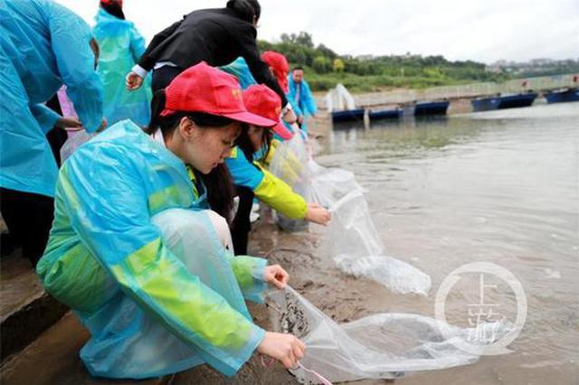 非法采矿致生态损失 八名侵权人购10万余尾鱼苗投放
