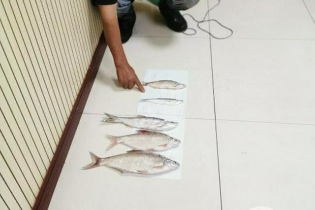 男子用违禁渔具非法捕捞被抓现行 举报者获500元奖励
