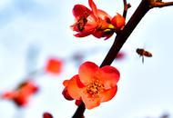 听见春天的声音