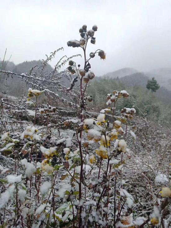 重庆遭遇冷空气和雨水影响 高山部分地区飘雪