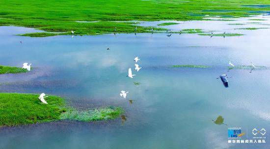 """巴南中坝岛:野生动物频来""""定居"""" 白鹭翩翩起飞"""
