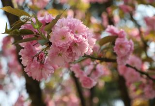 美爆了!重庆南山植物园花开满园
