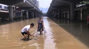 洪峰过境 市民拿着漏瓢公路中间捞鱼