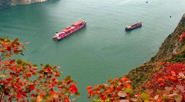 长江三峡:一库碧水荡漾 两岸红叶漫山