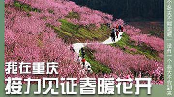 重庆美景与你共待春来