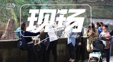 重庆动物园开园 熊猫憨态可掬萌翻众人