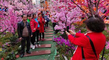 """三峡广场有个""""樱花林"""" 市民热情打卡"""