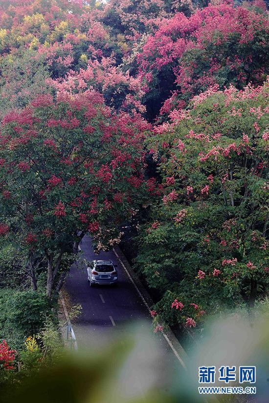 """重庆这个地方漫山遍野挂满""""红灯笼"""" 美不胜收(图)"""
