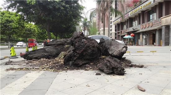 2吨重千年乌木丢街头2年无人问津 因影响市容将被清理