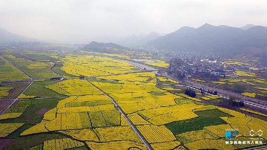 春回大地满目绿 鸟瞰重庆万亩油菜花田