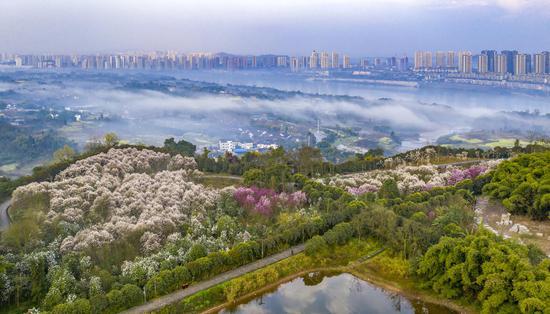 合川春季旅游节启幕 20项赏花摘果春游大餐等你来图3