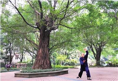 昨日,雨过天晴,市民在树林晨练。 上游新闻记者 杨新宇 摄