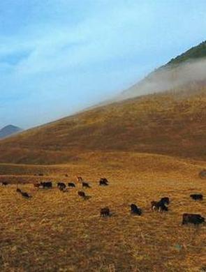 """重庆也有""""天苍苍野茫茫""""的草原景象"""