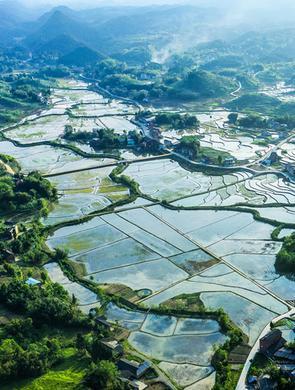 重庆43万亩稻田?#26691;?#30414;然画美景