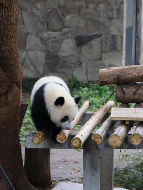 现场打探重庆动物园开园首日