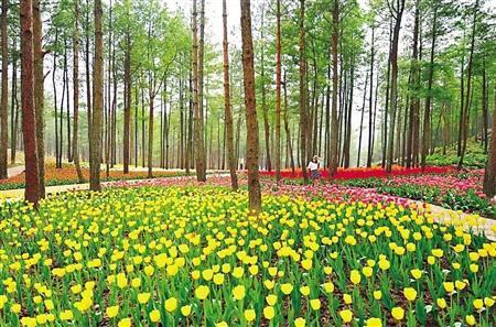 涪陵林下花园 本版图片由各景区提供