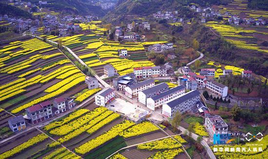 航拍重庆下坝村:一层一层油菜花 点缀美丽新农村