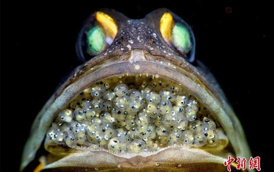全球水下摄影大赛获奖作品公布 揭秘水下绝美世界