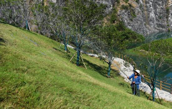 8月20日,一名工作人员在重庆铜锣山矿山公园维护草坪,他是石船镇石壁村村民。新华社记者 王全超 摄