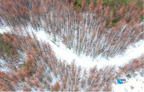 航拍重庆巫溪猫儿背 冬季枯木遇上初春白雪