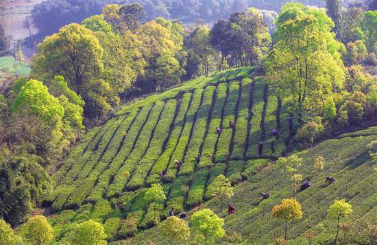荣昌再添13座公园 把树栽在老百姓能享受到的地方