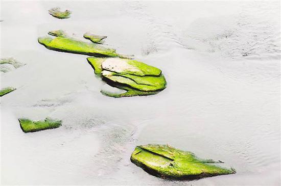 此次露出水面的莲花石。 通讯员 袁孝椿 摄