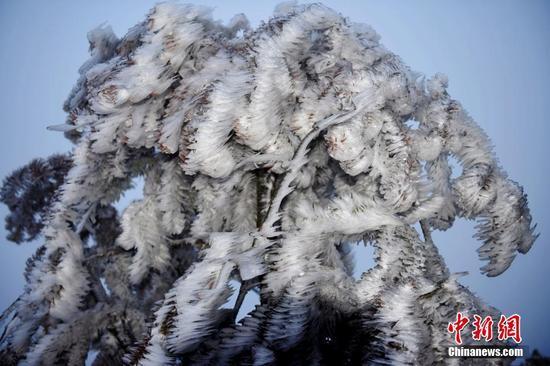 """重庆酉阳高海拔地区现冰凌景观 树木穿上""""冰衣"""""""