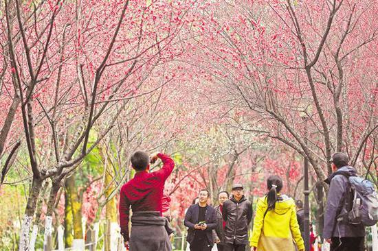 2月20日,江北嘴中央商务区中央公园,百花盛开,春意盎然,市民纷纷前来赏花迎春。记者 罗斌 摄