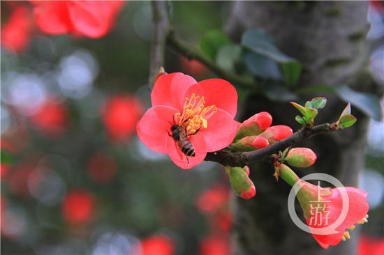 春光好鲜花开 重庆这些地方等着你晒太阳