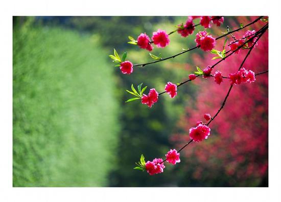 吴超老师作品——《桃之夭夭》  摄于枫丹苑