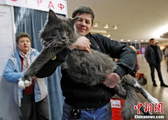 """乌克兰举行""""最大只猫咪""""比赛 12公斤""""巨猫""""夺冠"""